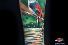Gringo-Bird-Pic-8.1.19