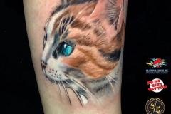Gringo-Cat-Pic-1-8.27.19
