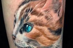 Gringo-Cat-Pic-2-8.27.19