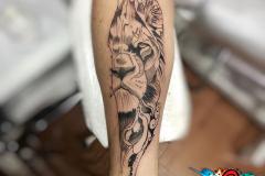 Gringo-Lion-Thin-Pic-6.5.19-1