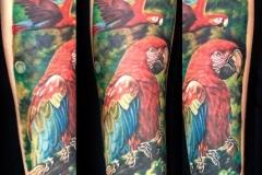 Gringo-Parrot-Pic-11.14.19
