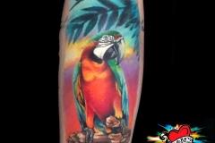 Gringo-Parrot-Pic-3.25.19