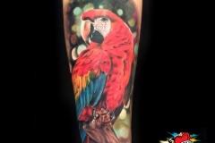 Gringo-Parrot-Pic-5.16.19