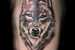 Gringo-Wolf-Pic-6.18.19