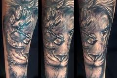 gringo-lion-pic-3.13.19