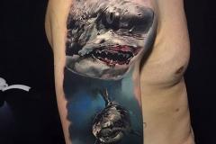 Jardel-Shark-11.9.19