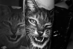 Pavel-Cat-Pic-5.13.19