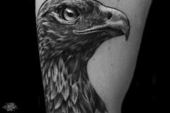 Pavel-Eagle-Pic-11.18.19