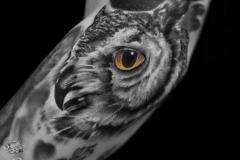 Pavel-Owl-10.17.19