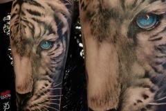 Pavel-Tiger-Blue-Eyes-Pic-9.15.19